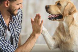 terapia_assistida_animais
